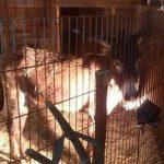 Piden que el Belén más grande de Toledo no utilice animales vivos