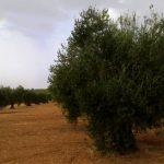 Agricultores Solidarios seguirá apostando por la integración en la región en 2016