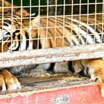 Ganemos pide que Toledo sea ciudad libre de circos con animales