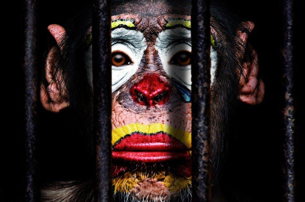 rp_campaña-circos-sin-animales-allma-animalis-1024x681.jpg