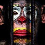 El PP retira su moción para declarar Talavera como ciudad libre de circos con animales