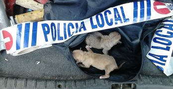 Siete cachorros abandonados en un contenedor son rescatados en Torrijos