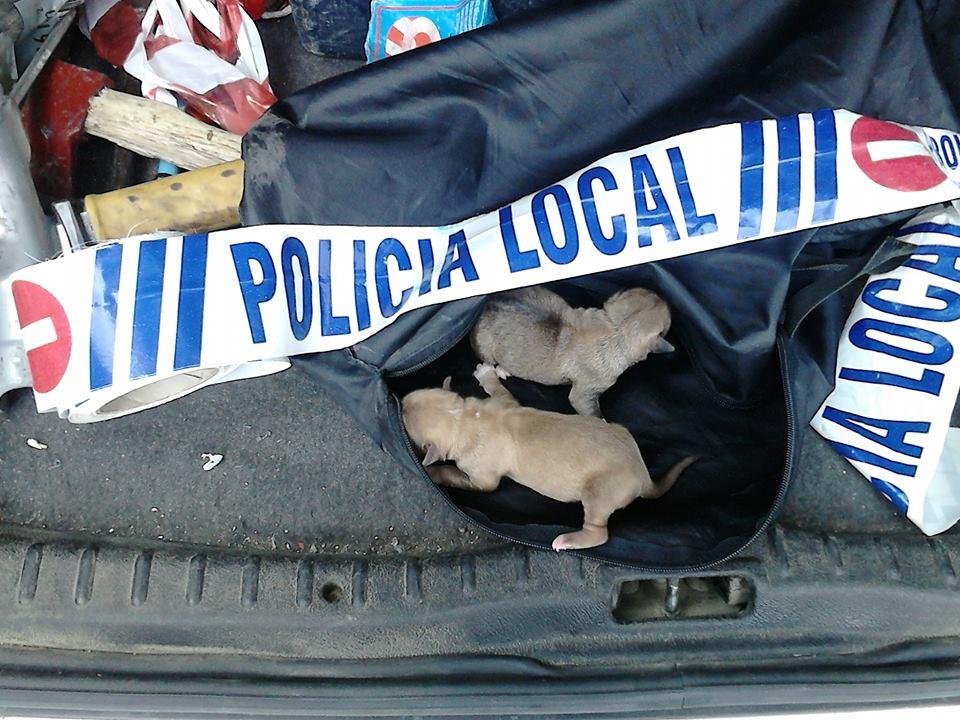 Perros rescatados del contenedor