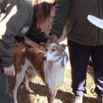 Tres detenidos por robar y maltratar perros de caza