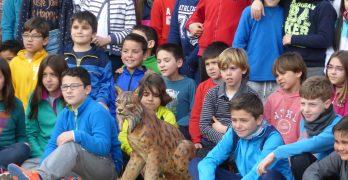 'El lince en el cole', para acercar las especies protegidas a los niños