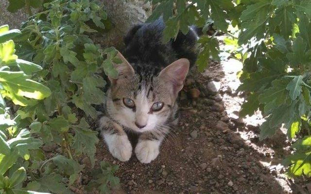 PACMA registra su proyecto CES para el control de colonias felinas en Talavera