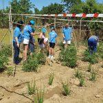 'La Semilla Solidaria', huertos para familias en situación de vulnerabilidad