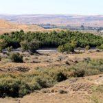 Un vertido del Polígono de Ontígola, posible origen de la muerte de arbustos protegidos