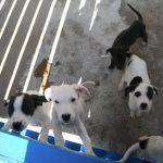 Ganemos Talavera denuncia el recorte de un 24% del presupuesto de la perrera municipal