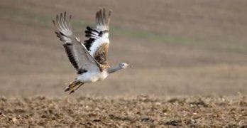 Objetivo: mejorar prácticas agrarias para la protección de aves esteparias