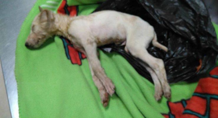 IU Fuensalida denuncia el abandono y maltrato animal de la localidad