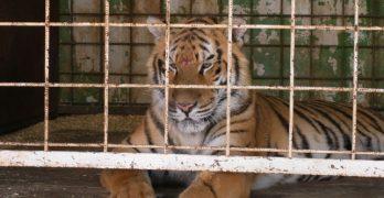 """""""Se está haciendo una campaña muy fuerte contra los circos con animales"""""""
