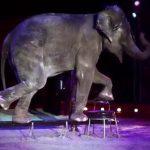 El alcalde 'popular' de Talavera, firme en su defensa de circos sin animales