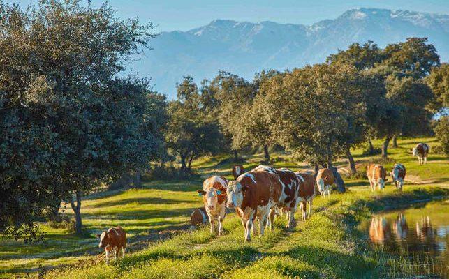 La provincia de Toledo acoge la nueva explotación ganadera de La Finca Jiménez Barbero