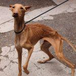 Un detenido en Toledo por maltrato animal tras arrojar a dos perros vivos a un pozo