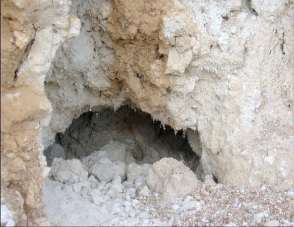 Foco 4 del amianto entre los que los conejos han construido sus madrigueras