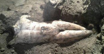 Descubren una estatua romana bajo la toledana plaza Amador de los Ríos