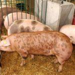 La Junta archivará el expediente para la instalación de las macrogranjas de porcino junto a Gamonal