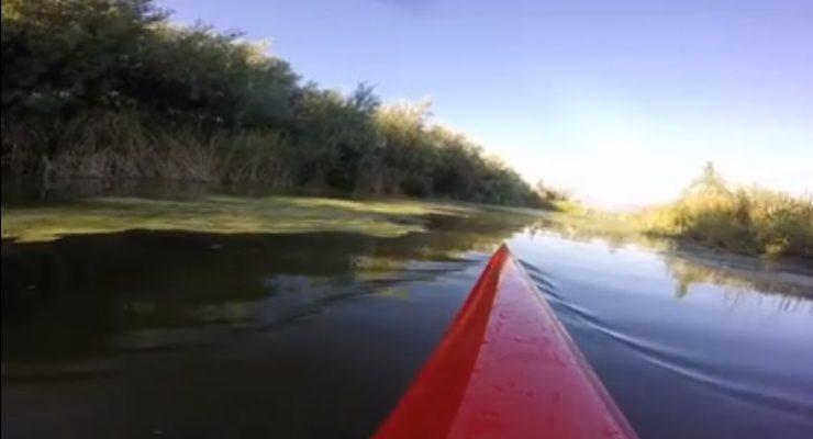 VÍDEO | El Tajo en Toledo, con espuma y en Talavera, las algas invaden el cauce