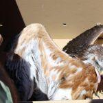 La provincia de Toledo registra desde enero casi 300 avisos para la recogida de especies amenazadas