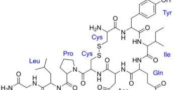 Los misterios de la oxitocina y su relación con (una parte) del sexo y del amor