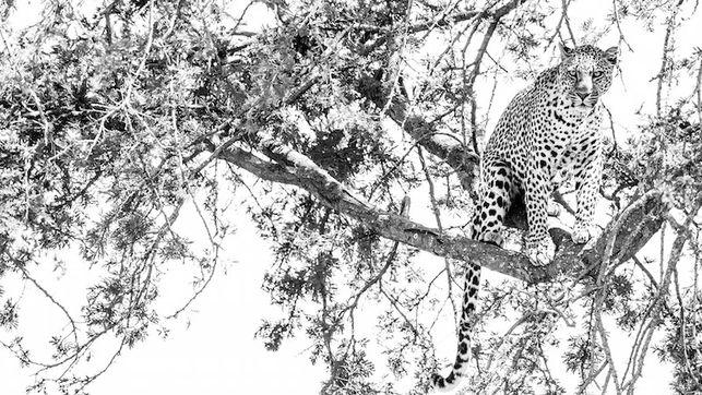 Kudu: una visión diferente de África a través del alma de sus animales