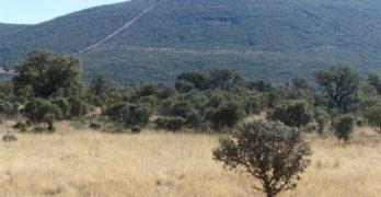 Piden paralizar un cerramiento cinegético en el espacio protegido de los Montes de Toledo