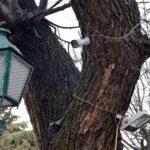 Cs y PP denuncian los cables y focos que todavía tienen algunos árboles en el paseo de La Vega