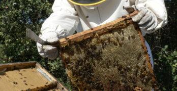 La Finca 'El Borril' invita a realizar un recorrido por la realidad de las abejas