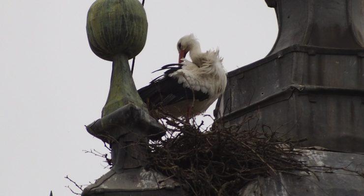Solicitan protección para los nidos de cigüeña de la Basílica del Prado de Talavera