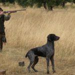 """La """"desprotección"""" de los perros de caza, uno de los escollos en la futura Ley de Bienestar Animal"""