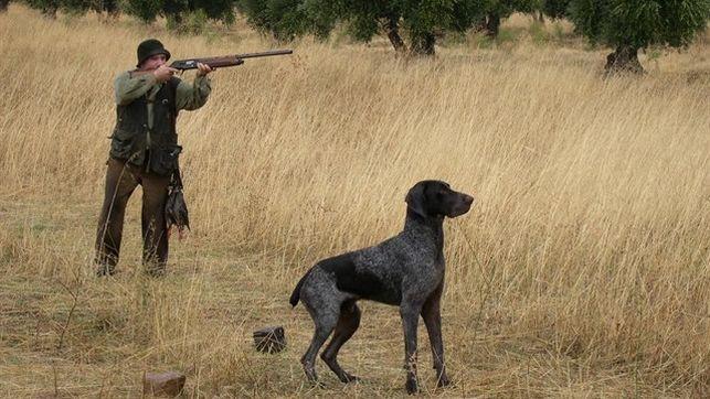 Denuncian a varios toledanos por cazar de manera furtiva en cotos de la zona de Almazán (Soria)