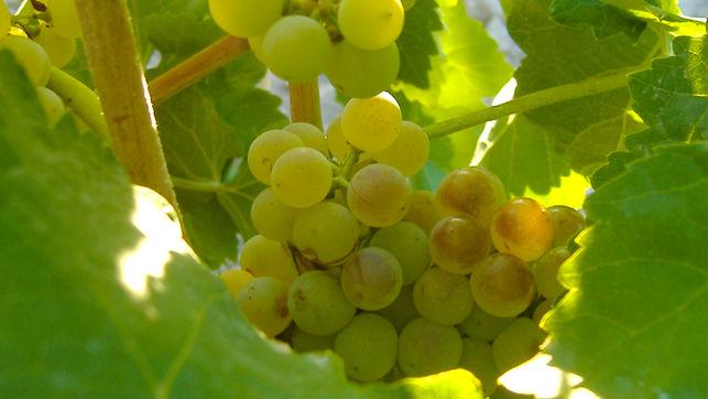Jornada VinoDiversidad o la importancia de aprovechar las sinergias entre empresas y biodiversidad