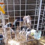 Rescatados cinco caballos y seis perros en peligro de muerte en una finca de El Viso de San Juan