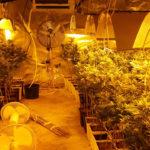 Detienen a un padre y a su hija por tener 800 plantas de marihuana en Méntrida