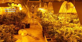 Juzgan a una pareja en Toledo por cultivar 800 plantas de marihuana y blanquear más de 200.000 euros
