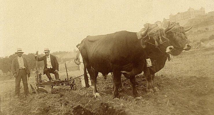 Revoluciones en el arado a buey y otras innovaciones que fueron expuestas en Toledo en 1909