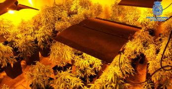 Desmantelados dos laboratorios clandestinos  de cultivo 'indoor' de marihuana en Pepino