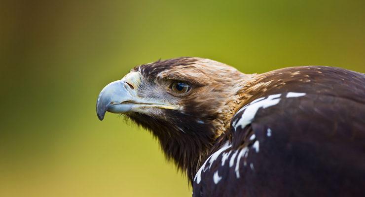 Fianza de 168.000 euros al dueño de un coto y dos guardas por envenenar a más de 50 aves