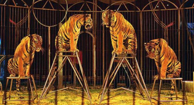 La Justicia anula la prohibición de circos con animales en Talavera de la Reina