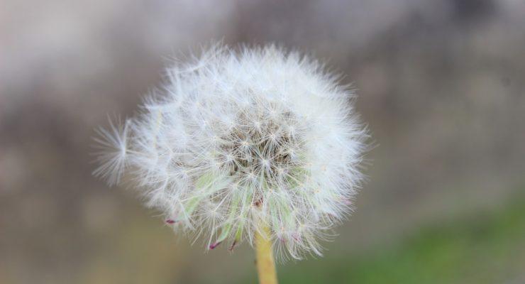 La UCLM informará sobre los niveles de polen en Talavera