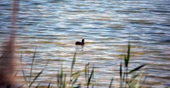 """Organizaciones ambientales, contra el Pacto Regional del Agua por """"contradictorio"""" e """"inadecuado"""""""