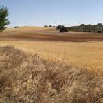 La Red de Custodia Agraria para la protección de aves esteparias alcanza las 16.000 hectáreas en la región