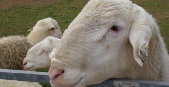 Convocan ayudas de hasta 50.000 euros para crear nuevas empresas agrarias