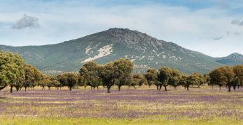 Septiembre, el mes de la berrea y de las rutas por los Montes de Toledo y los humedales manchegos