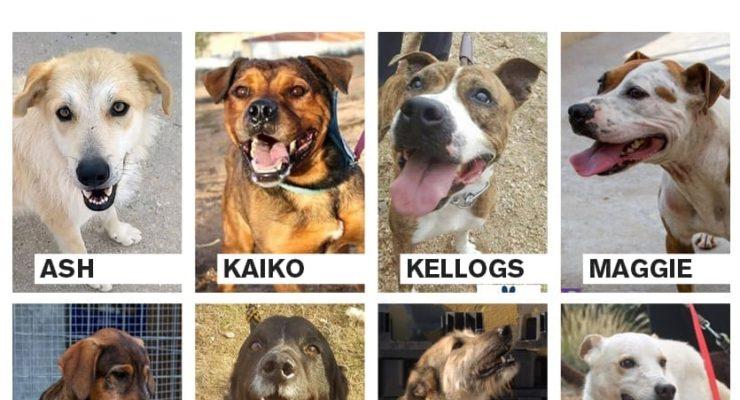 Buscan acogida para ocho perros en Toledo que corren el riesgo de ser sacrificados