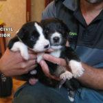 Cuatro detenidos por vender cachorros por internet que morían tras la compra