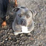 Piden ayuda para localizar al autor de la muerte de una perra que desapareció en Méntrida