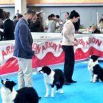 Talavera acoge la I Exposición Nacional Canina 'Especial de Razas Españolas'