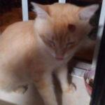Un gato callejero de Talavera sobrevive a un disparo de perdigón en la cabeza